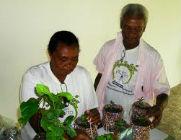 Pessoas trabalhando com plantas medicinais